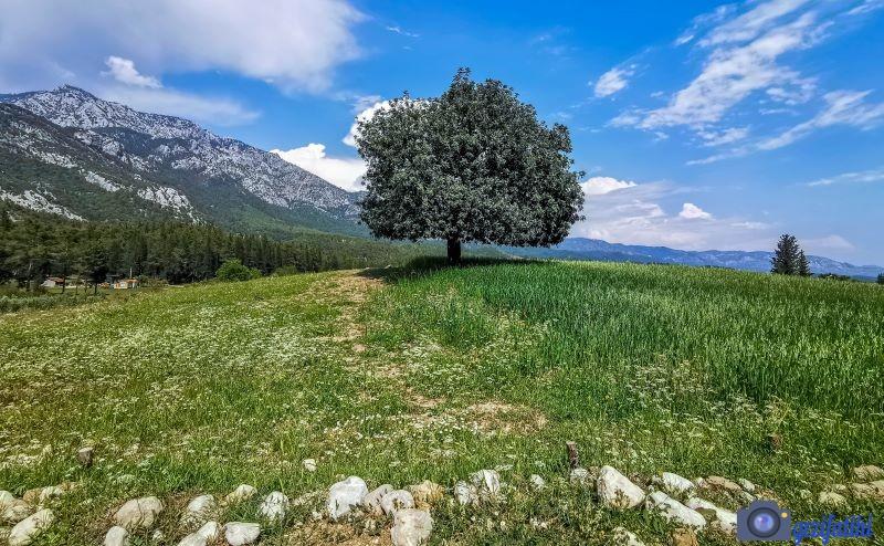 Akbaş göleti çevresinde yeşillik alan